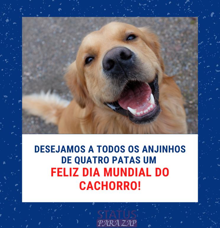 Desejamos a todos os anjinhos de quatro patas um feliz dia mundial do cachorro!